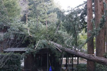A 150 foot tree fell on West Baltimore Avenue Monday taking out local power and damaging one home.