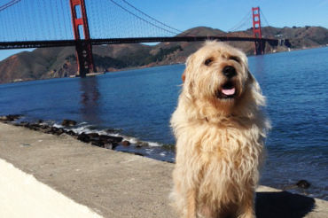 Proposed leashlaws have the potential to restrict where dogs can be off leash, including numerous beaches and hiking trails throughout Marin and San Francisco.