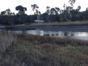 The Corte Madera Creek Watershed is one of Marin's many treasured environmental spots.