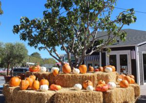 Marin Country mart, provides its customers pumpkins in the form of the honor system.