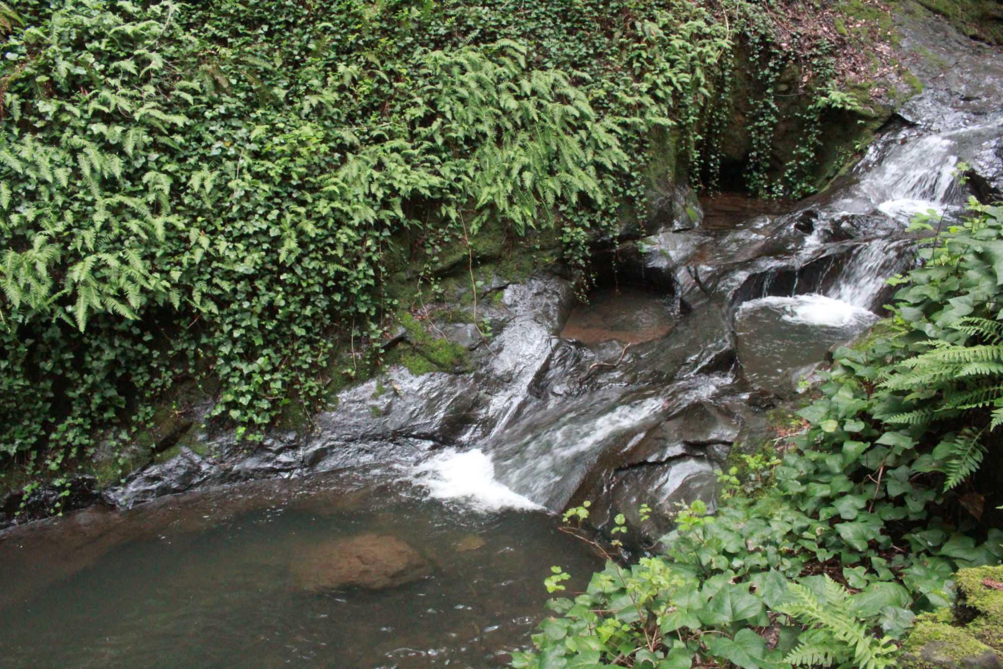Three Wells, Mill Valley