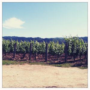 A view of George Family Winery in Napa, California.