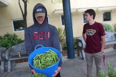 Junior Gabe Mandossian showcases green beans.