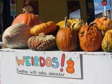 Marin's best pumpkins