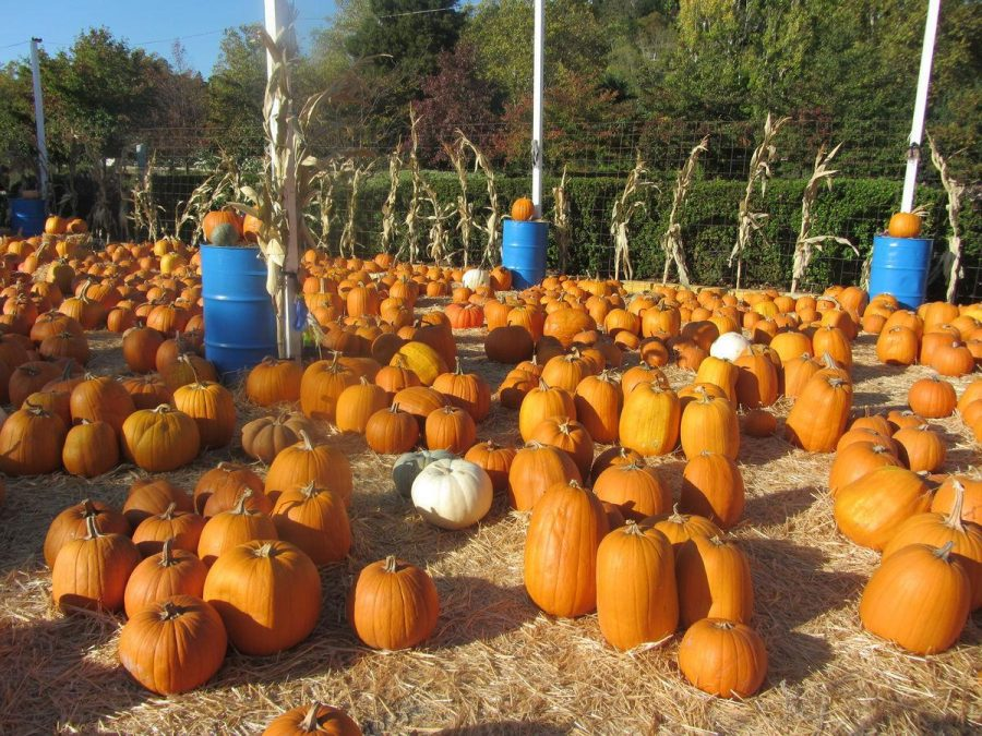 Ian's annual pumpkin patch re-opens in Bon Air