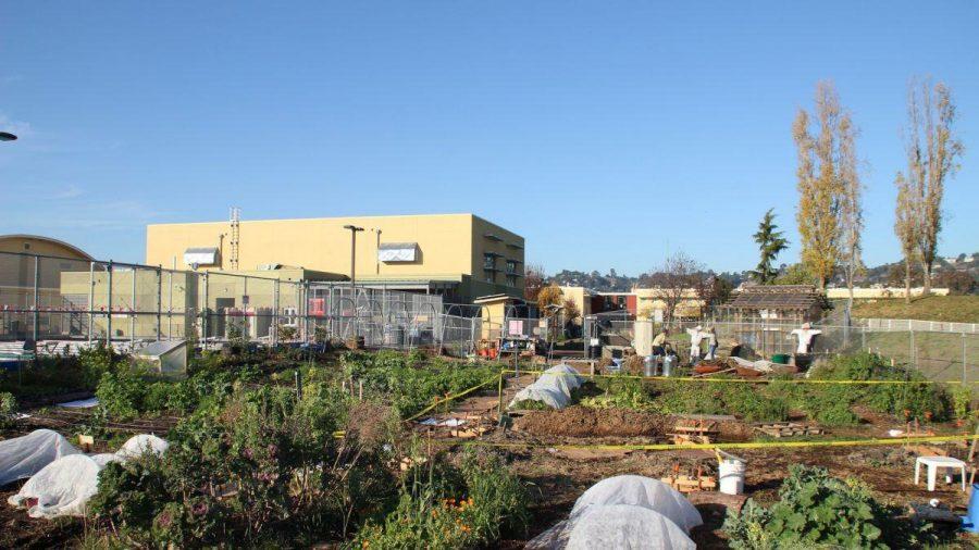 farmground1