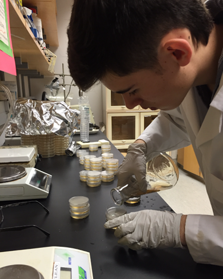 MATTHEW MOSER prepares petri dishes for his parasite experiment. Moser will be traveling to Pittsburgh in May to participate in the competition.