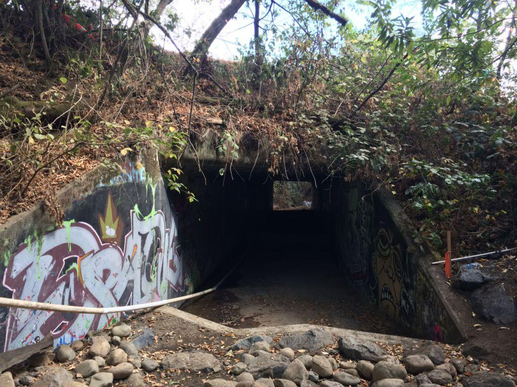 Fish Passage built to protect Marin's salmon
