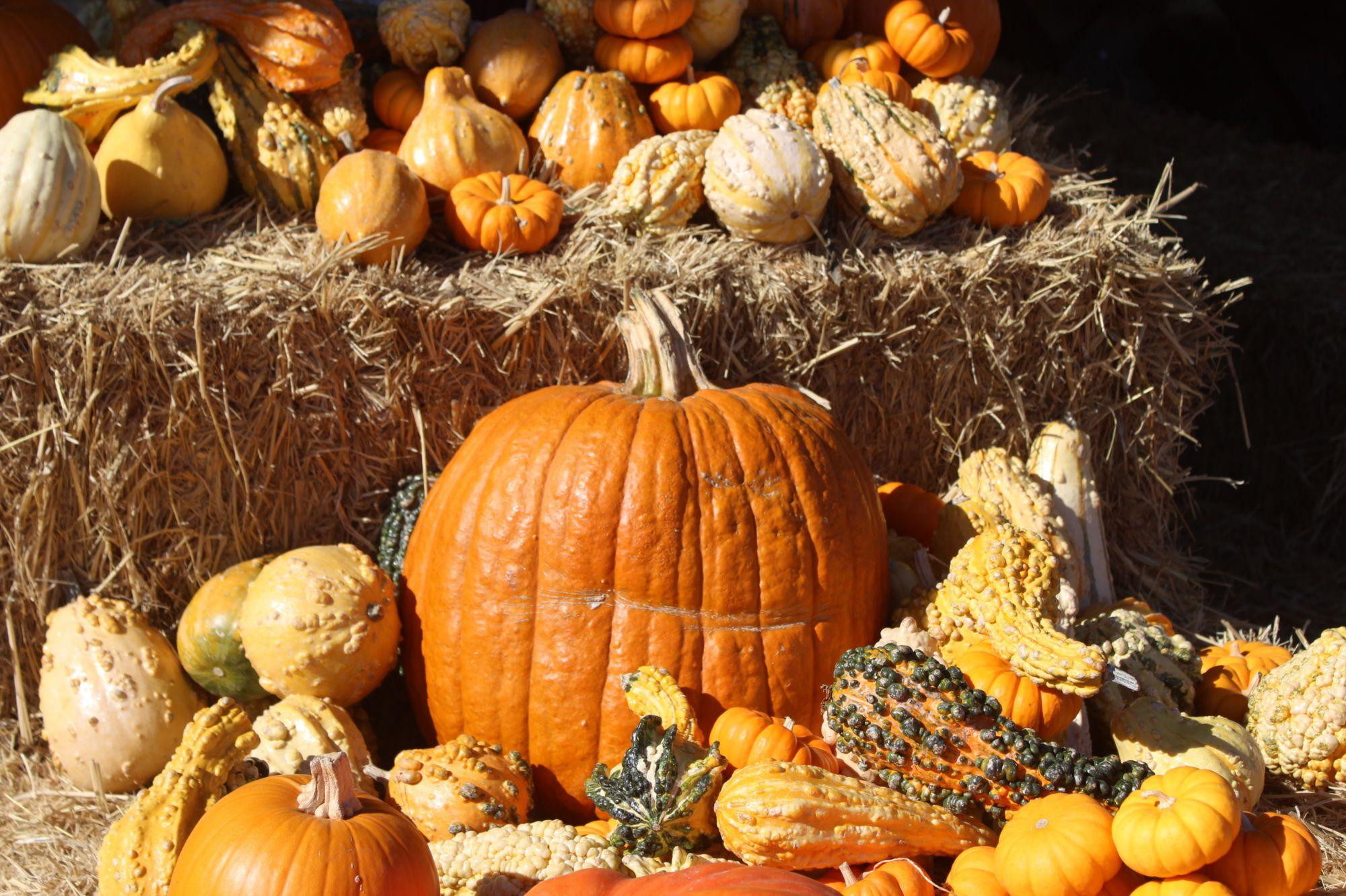 Jump into fall by visiting Marin's best pumpkin patches
