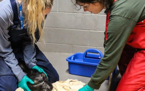 From classroom to the Marine Mammal Center, students volunteer time to rehabilitate rescued marine life