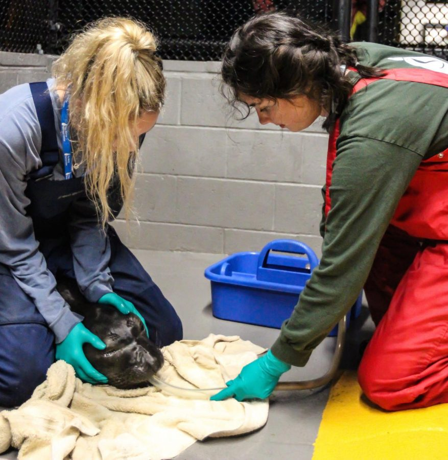 From+classroom+to+the+Marine+Mammal+Center%2C+students+volunteer+time+to+rehabilitate+rescued+marine+life