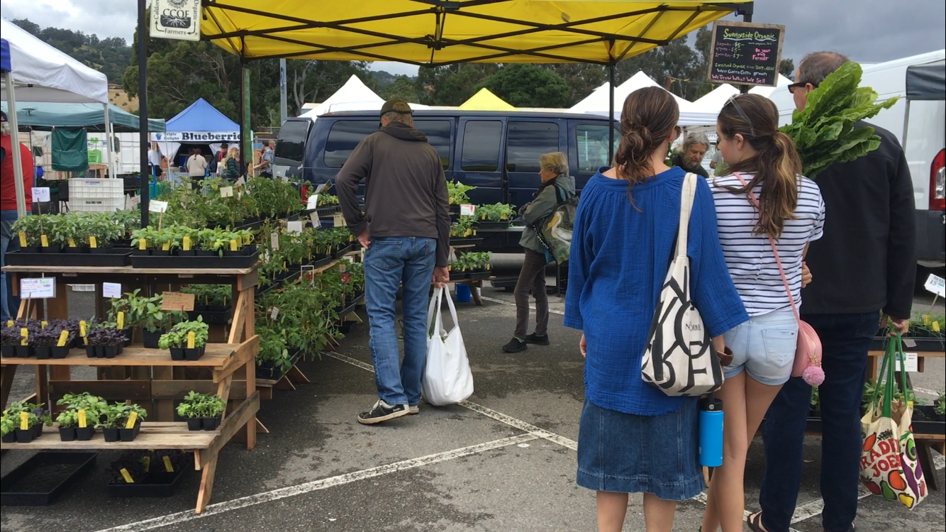 Community members browse a local farms produce at the San Rafael Civic Center Farmers' Market.