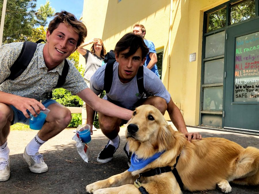 Juniors Corbin Mason and Zan Curleigh petting a therapy dog at the Wellness Center to alleviate stress from upcoming finals.