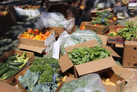 Wasting away: Marin organizations strive to solve the issue of excess food