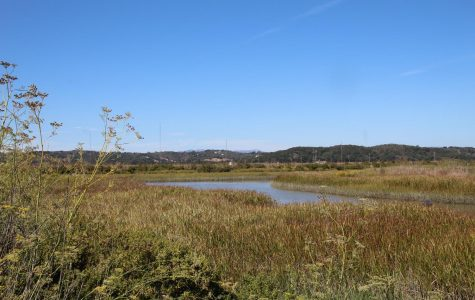 A narrow waterway snakes through a section of the wetlands adjacent to the Bel Marin Keys in Novato.