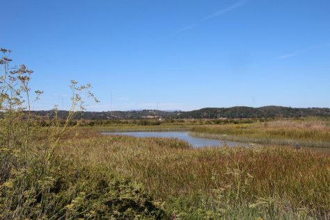 Bel Marin Keys wetlands to undergo first phase of restoration this month