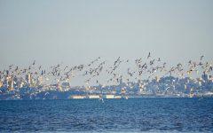 North American bird populations are vanishing according to recent studies