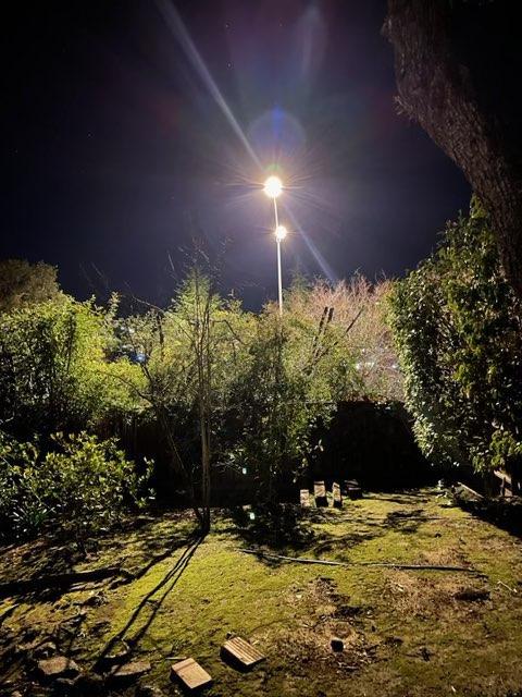 Streetlights turning night into day in residents' backyard