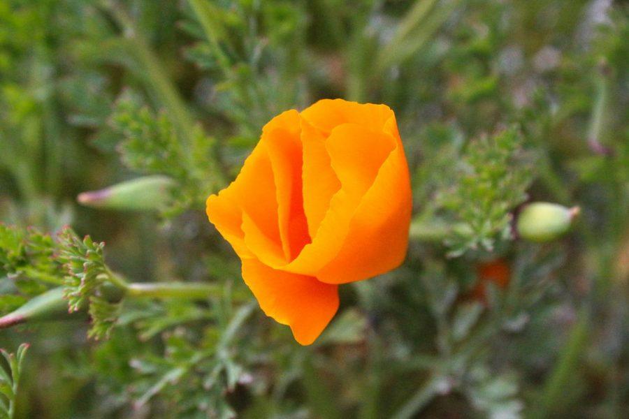 Seeing Orange