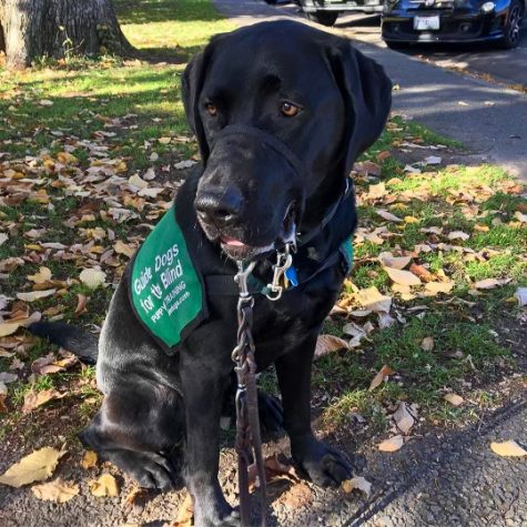 Nogueiro sisters take on raising guide dogs